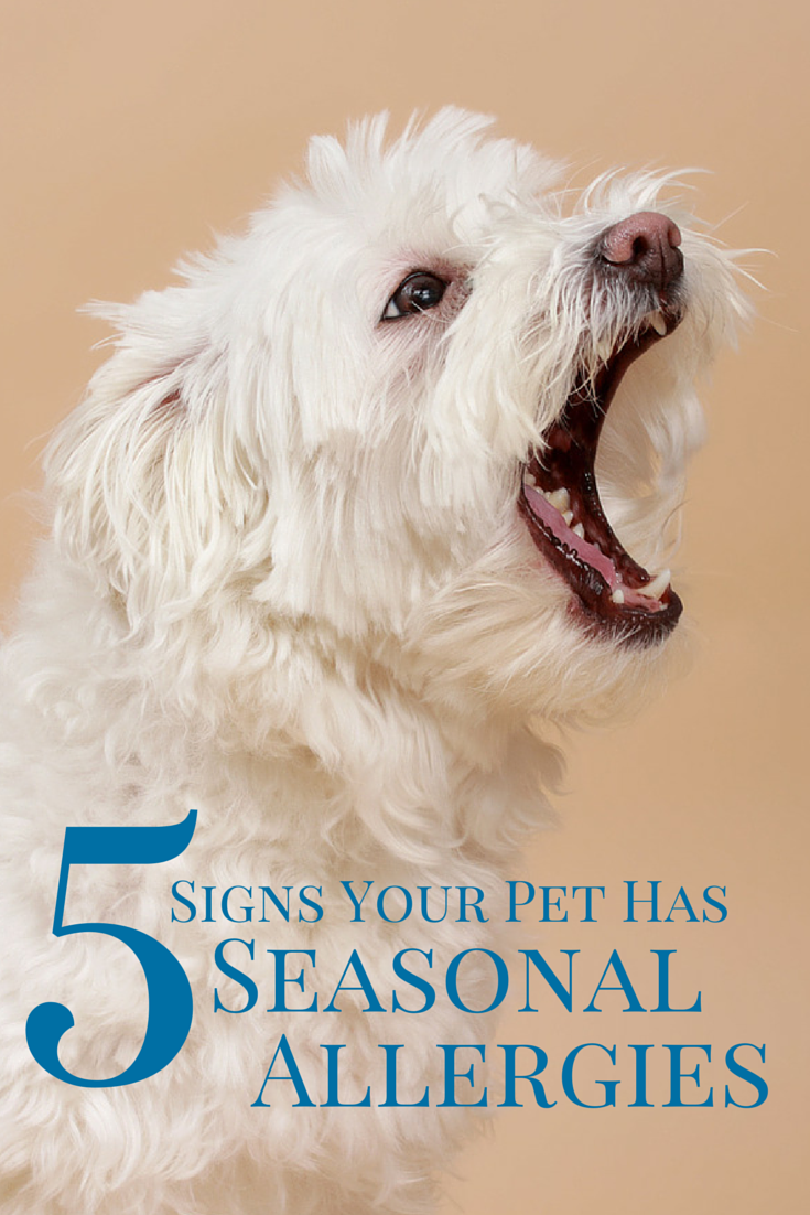Top Five Signs Your Pet Has Seasonal Allergies With Images Dog