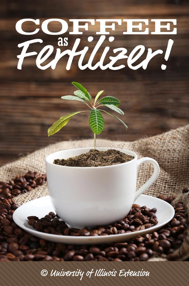 Answers to the question: Can you use coffee as fertilizer ...