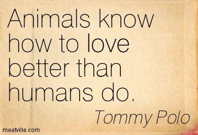 Animals Are Better Than Humans Quotes Things I Love Animals