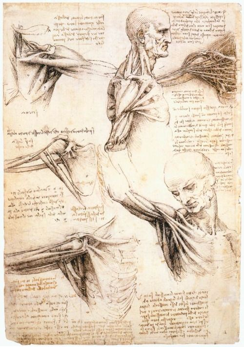 petitpoulailler:  thepaintinghasalifeofitsown: Leonardo da Vinci (Italian Renaissance polymath: painter, sculptor, architect, musician, mathematician, engineer, inventor, anatomist, geologist, cartographer, botanist, writer, and all-around great guy) ~ Anatomical studies of the shoulder