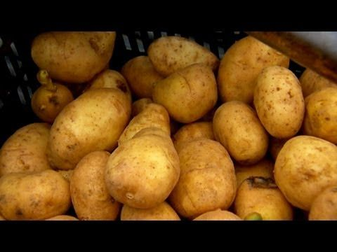 How to Cut and Plant Potatoes | P. Allen Smith demonstrates how to cut and plant potatoes. {video}