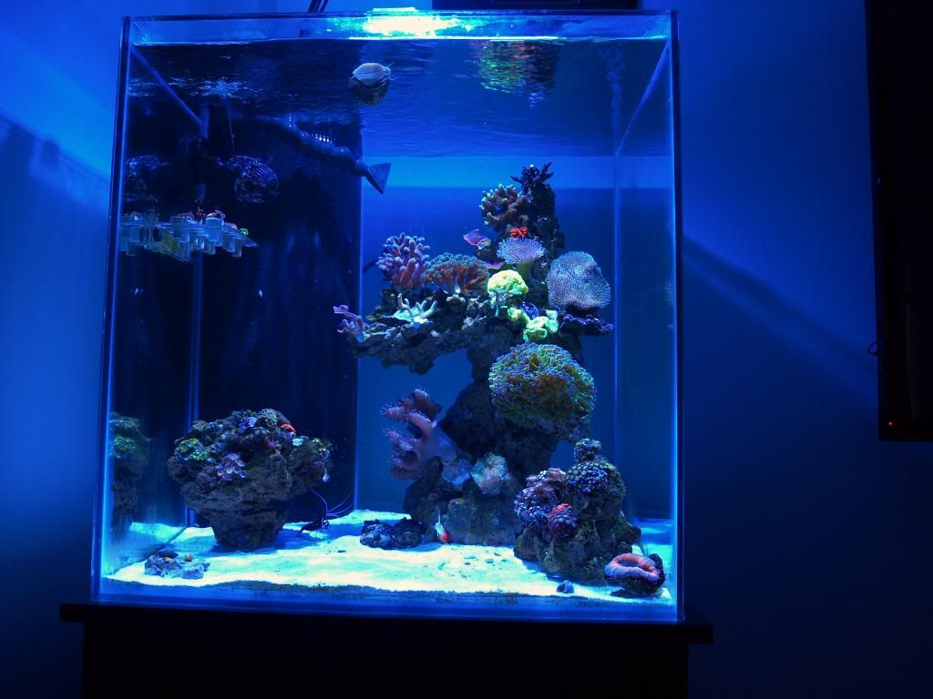 93 gallon cube tank thread 60 gallon reef ready rimless for Cube saltwater fish tank