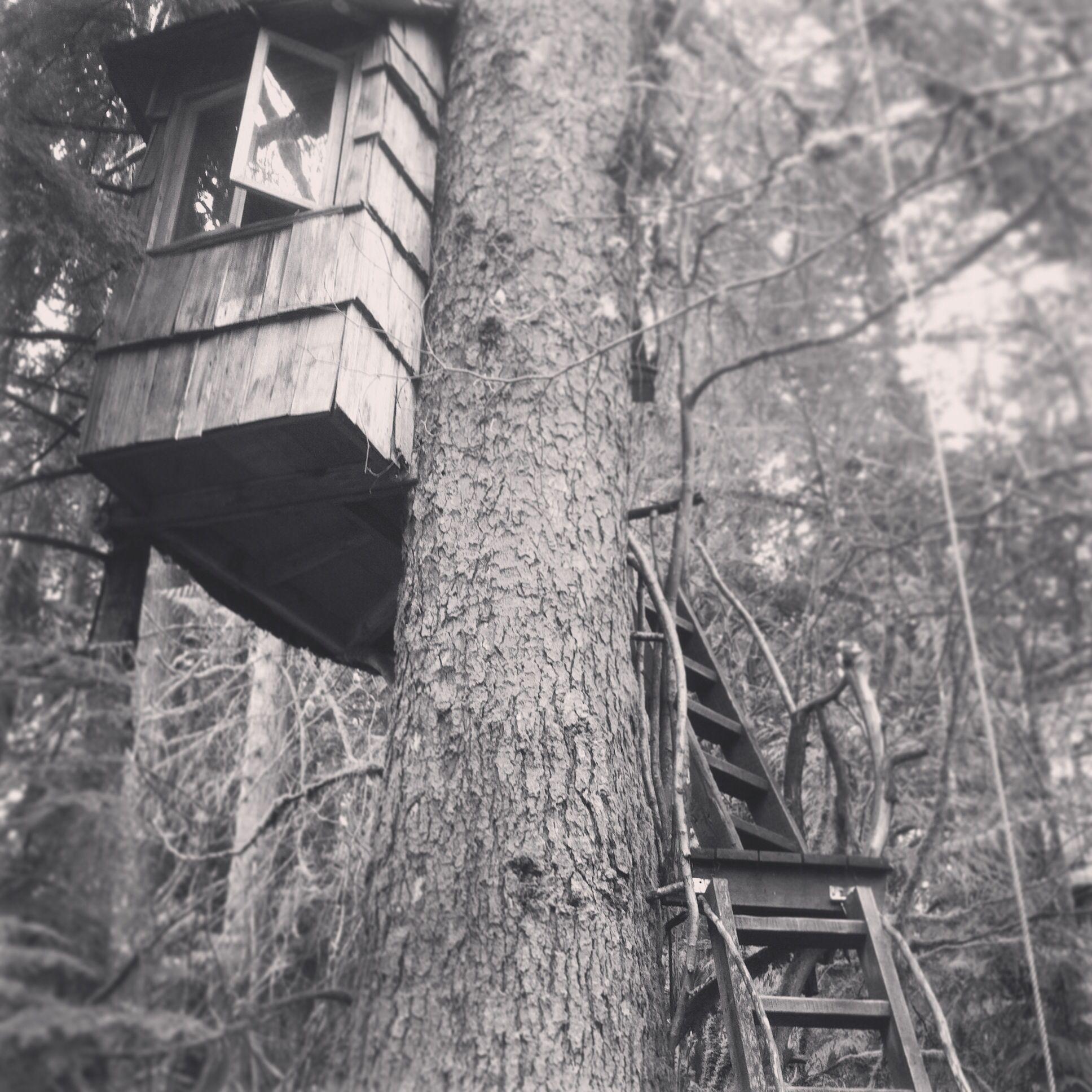 Treehouse Fall City Wa Part - 46: Treehouse At Treehouse Point, Fall City Washington