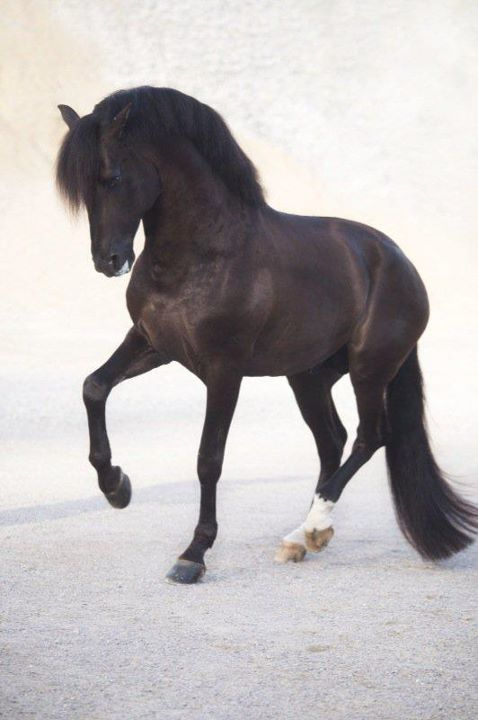 riderless. :) | Ashton Holland Equestrian Style | Pinterest ...