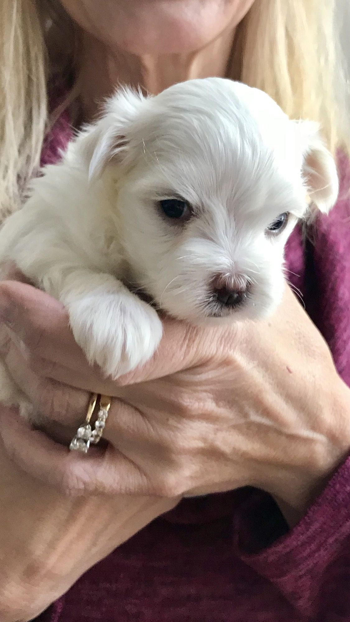 4 Weeks Old And Already Stealing Hearts With Images Fluffy