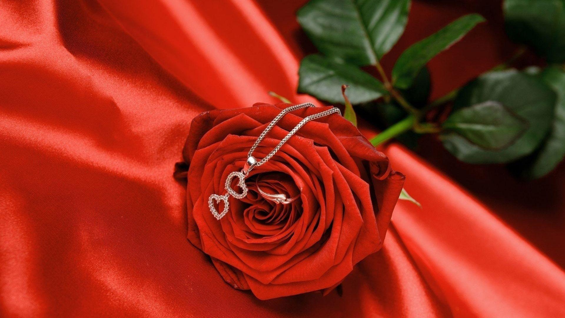 Love Rose Hd Wallpapers Hot Hd Wallpapers Blumen Rosen