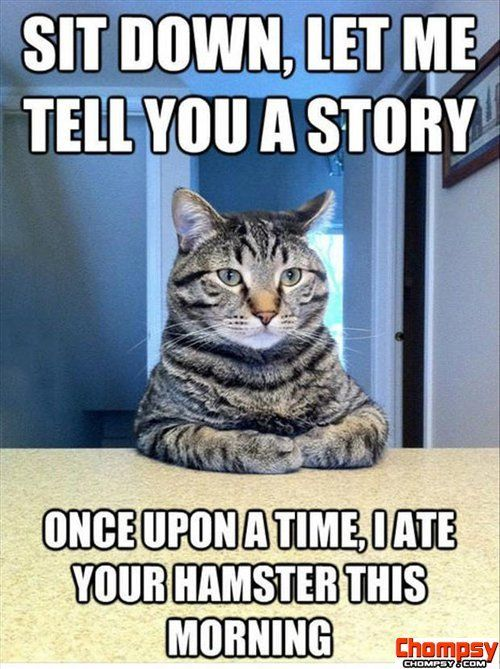 Cat At Table Meme Funny Picture Of Cat Sitting At The Table Funny Cat Quotes Posted On Silly Animals Funny Cats Funny Pictures
