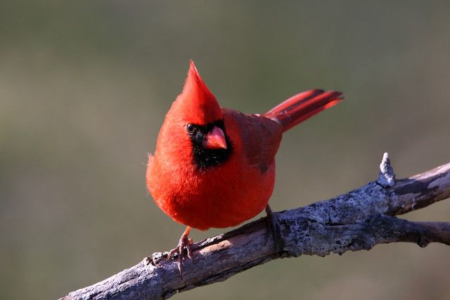 red robin bird willow13 s wunderblog magnificent birds weather