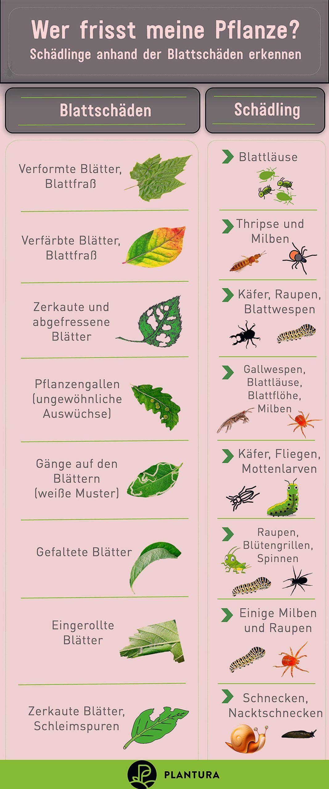 10 Hausmittel Gegen Schadlinge Im Garten Plantura Fruchte Im Garten In 2020 Schadlinge Im Garten Pflanzen Gartenschadlinge