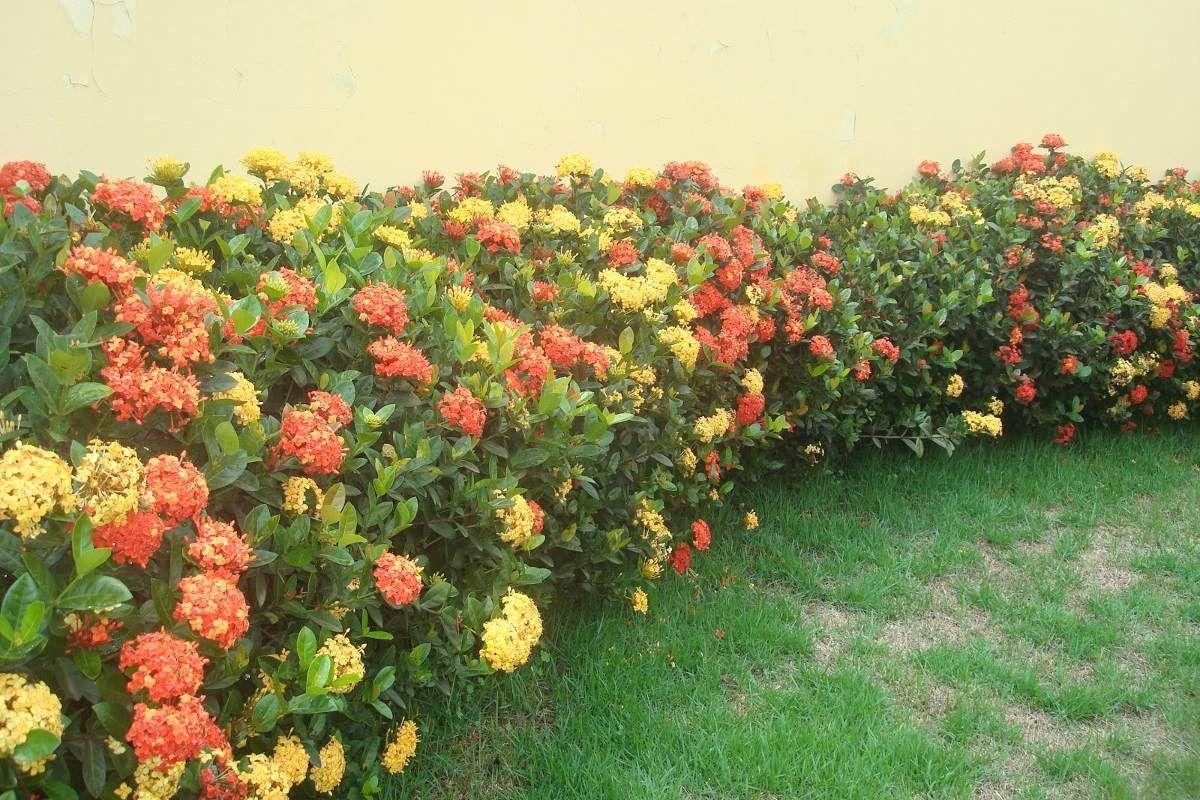 Cerca viva com plantas pesquisa google jardin for Google jardin
