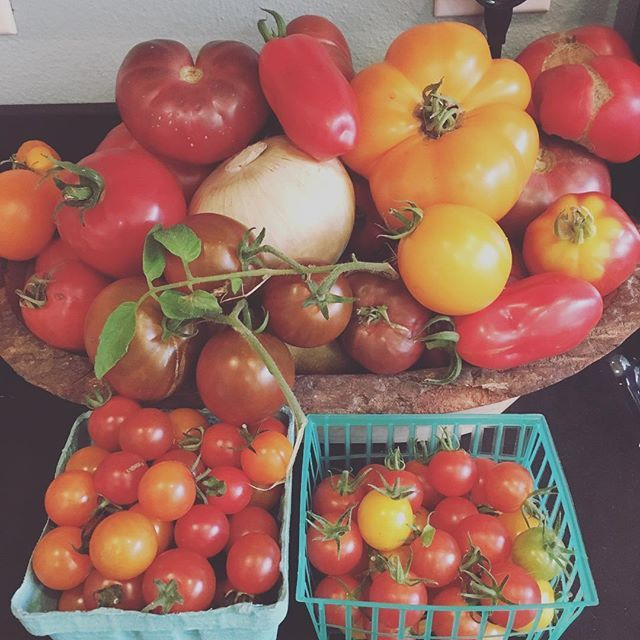 Good problems to have!  Bring on the tomato sauce and salsa! 🍅🍅💃🏻💃🏻