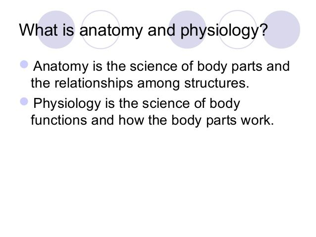 Chapter 1 Notes Intro To Anatomy And Physiology Study Guide