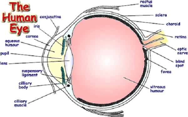 Eye Diagram Ks3 Eye Diagram Ks3