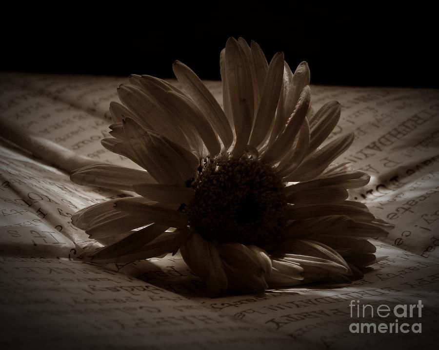 Gothic Birthday Flower Sepia Photograph  by Chalet Roome-RIgdon