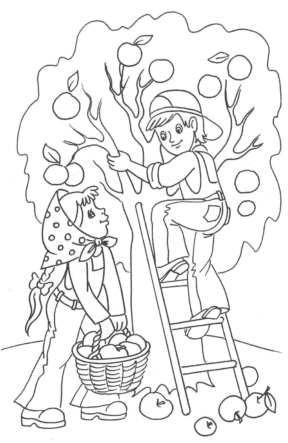 Раскраска. Осень | Раскраски, Рисунки для раскрашивания ...