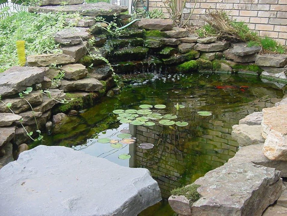 Pretty and small backyard fish pond ideas at decor for Fish pond waterfall ideas