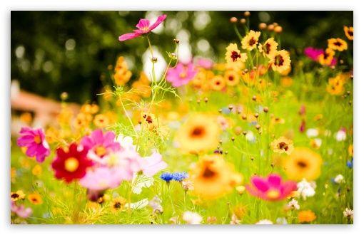 Flowers, Soustons, France wallpaper
