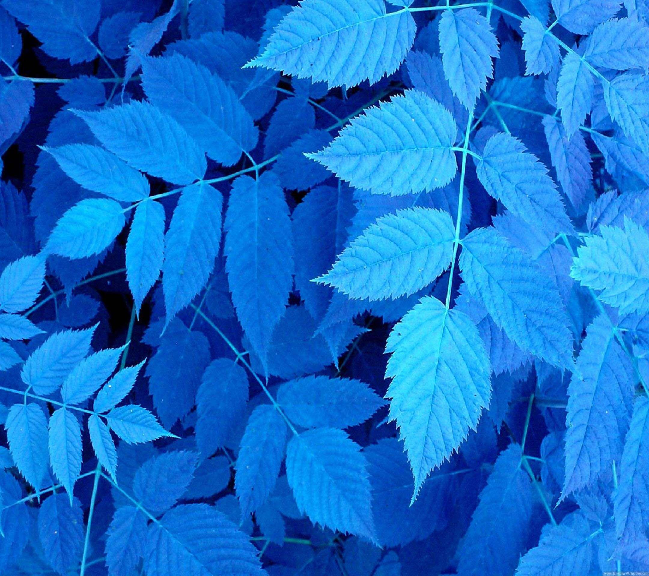 スマホ 壁紙 スマホ壁紙 壁紙 植物