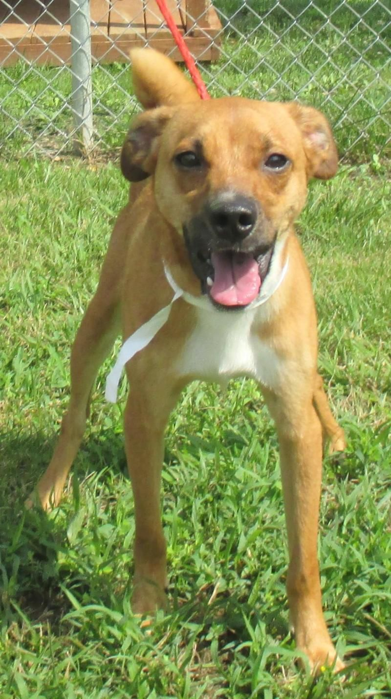 Ollie is an adoptable Terrier searching for a forever