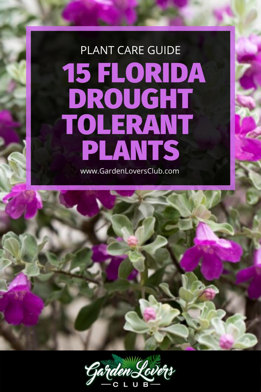 15 Florida Drought Tolerant Plants Photos In 2020 Drought Tolerant Plants Drought Tolerant Landscape Front Yard Heat Tolerant Plants