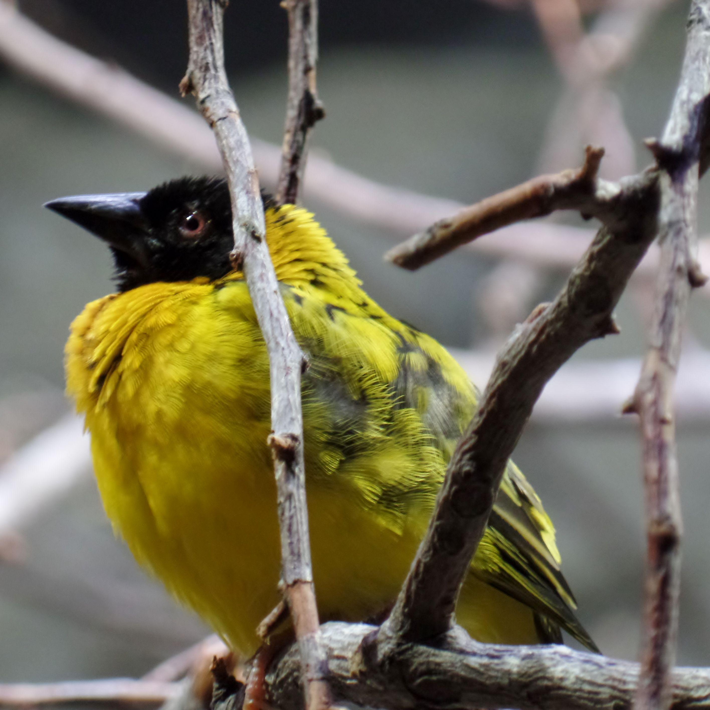 wie heisst dieser Vogel? (mit Bildern) Tierpark