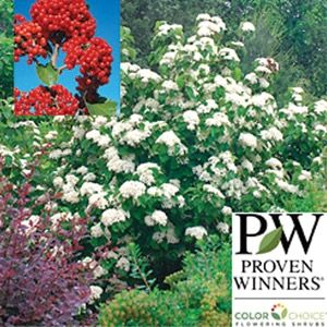 Garden Crossings Online Center Offers A Large Selection Of Witherod Plants Our Shrub Catalog Today
