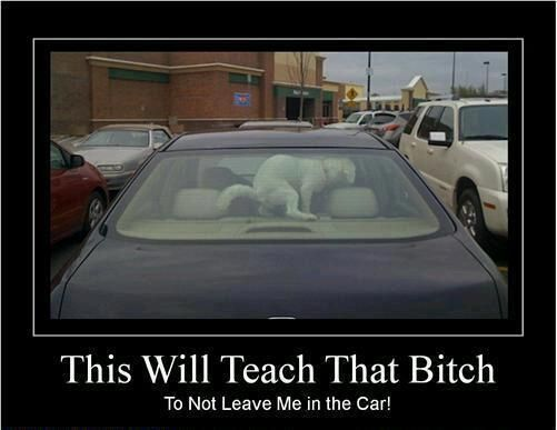 This is something my dog Cowboy would do...I mean he got mad at me and crapped in my shoe once!