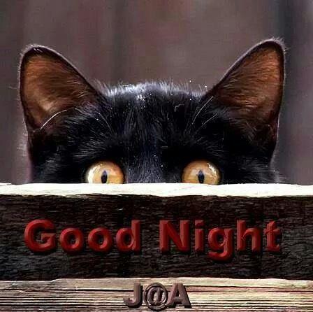 """Résultat de recherche d'images pour """"good night humour"""""""