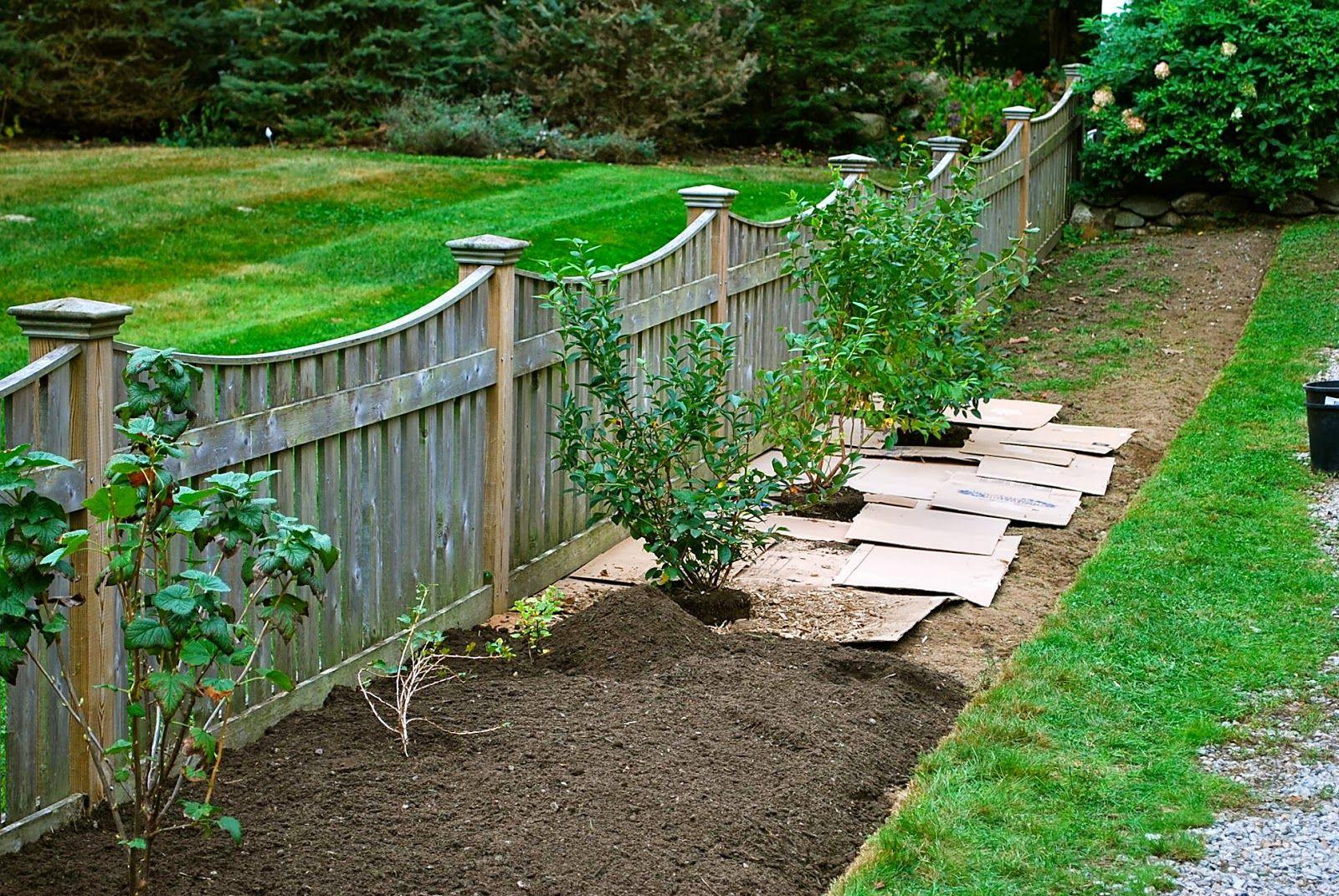 blueberries landscape google search backyard fences on backyard garden fence decor ideas id=31182
