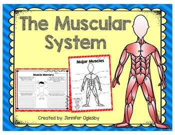 10++ Can a muscle be both voluntary and involuntary ideas