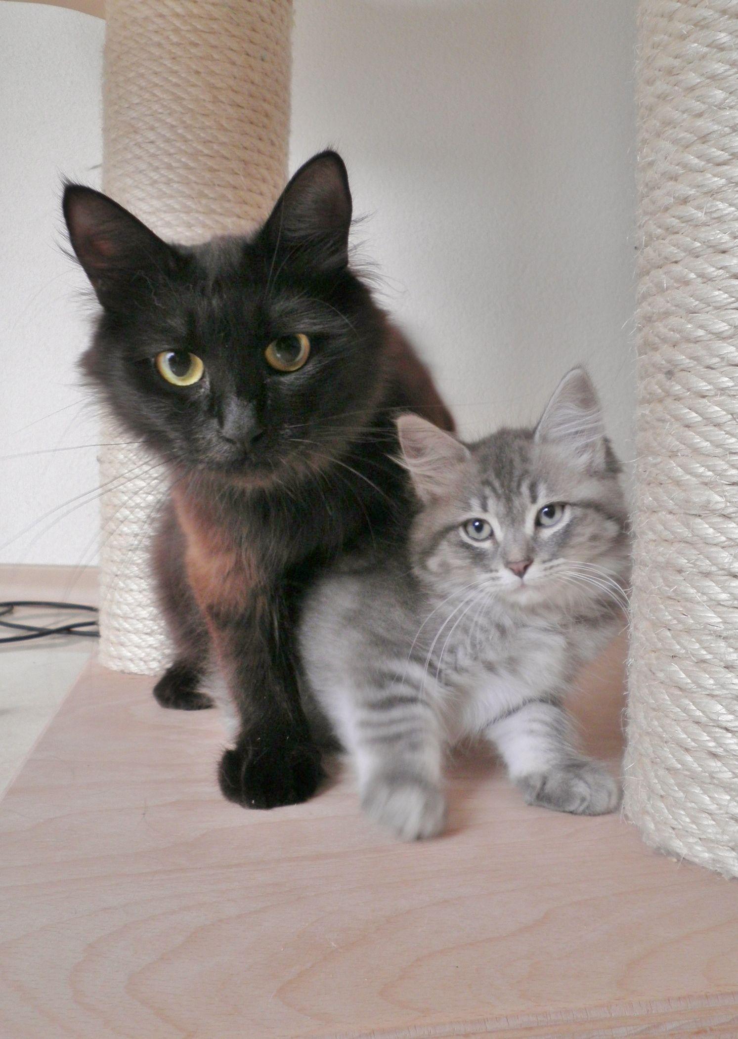 Sophie 10 Weken Oud En Haar Moeder Naomi Old Cats Cute Animals Cute Cat