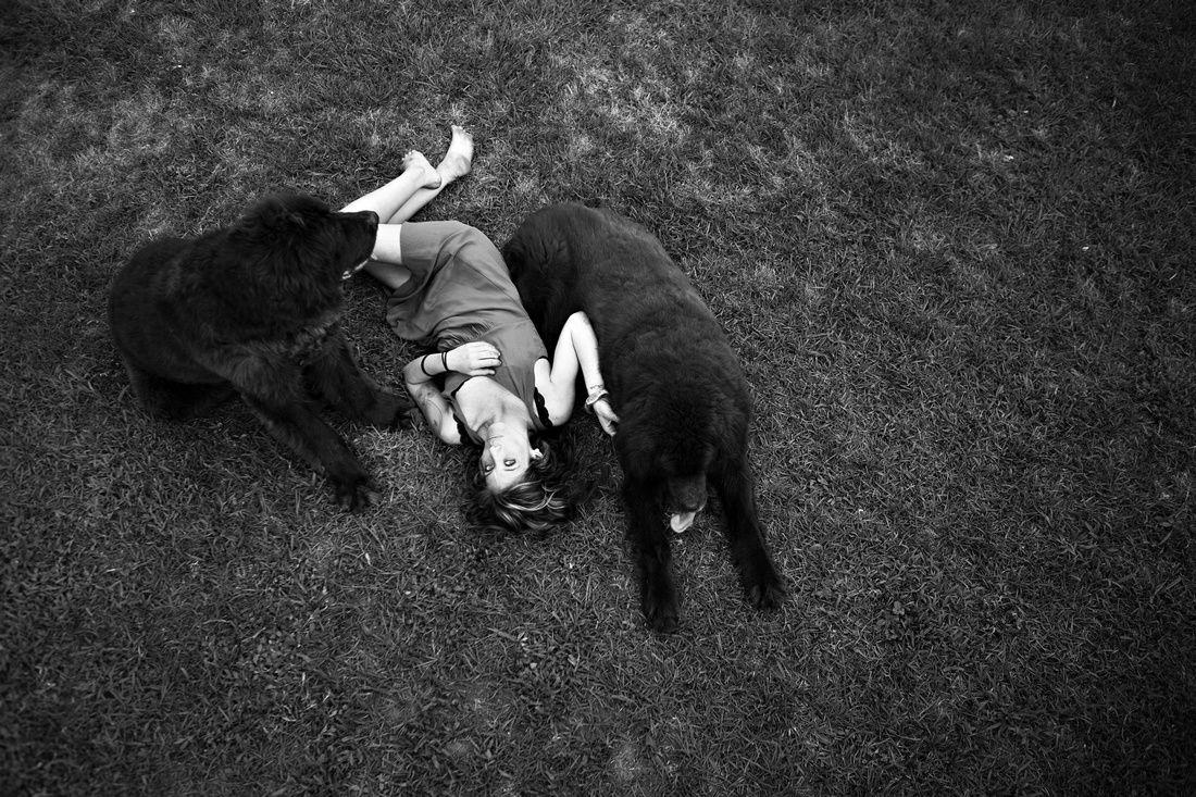 Newfoundland poodle puppies colorado