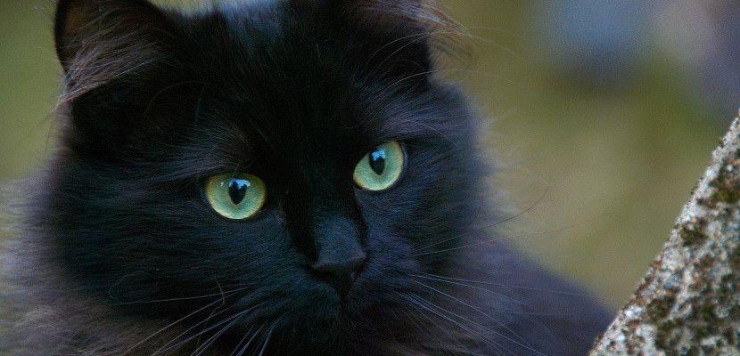 Vocabulario Inglés Para Las Partes Del Gato Cats And Kittens