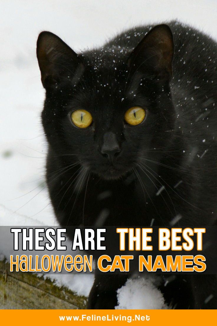 This is the best list of Halloween cat names! (With images