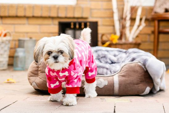 Bailey Bella Fleece Bone Pajamas Food Animals Pet Store Pet Supplies