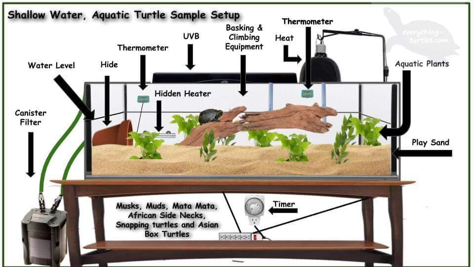 How To Set Up A Tank For Shallow Water Turtles.