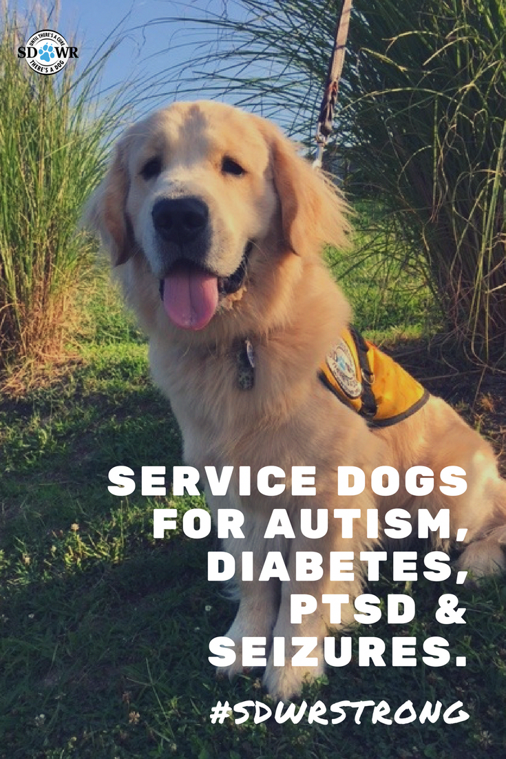Service dogs aim to aid those that live with an invisible illness
