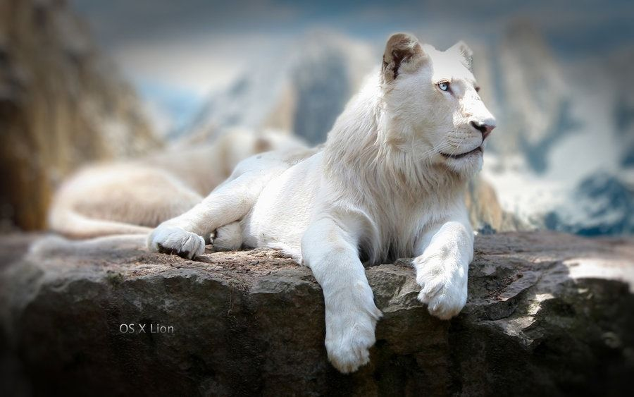 55 New Mac Os X Lion Wallpapers In Hd For Free Download Lion