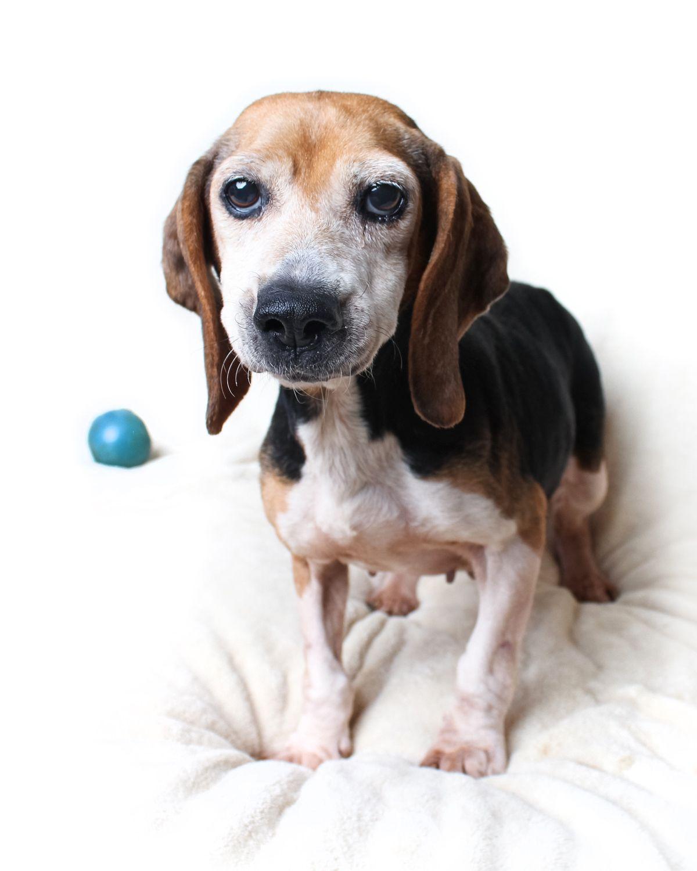 Help A Deserving Rescue Win 5 000 In Petplan S Tournament Of Tails Shelter Pet Challenge Pet Health Insurance Pets Pet Shop
