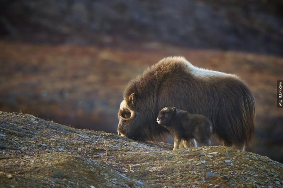 這些動物父母跟他們的迷你版合照真的可愛到讓人受不了! - TEEPR