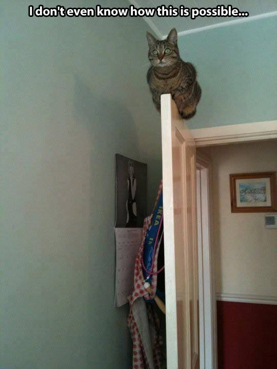 Law of cat physics states a cat will always migrate to the highest surface in a room. Yep. True.