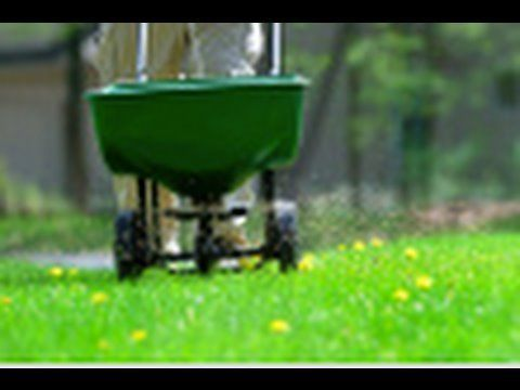 Grow a Lawn Easily is part of lawn Care Bermuda - How to Grow a Lawn Easily  Everyone wants a perfect lawn  What's better than looking out your front door and seeing lush, green grass  You don't need to be a landscape artist to have the lawn of your dreams  Whether you start from seed or