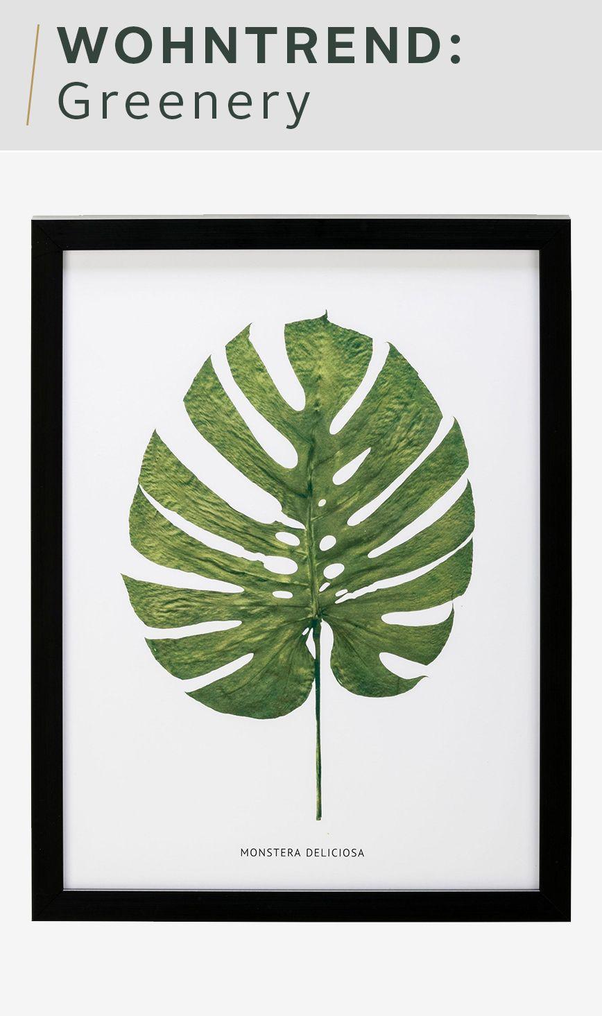G&C gerahmtes Bild »Blatt Monstera Deliciosa« 30/40 cm | Pinterest ...