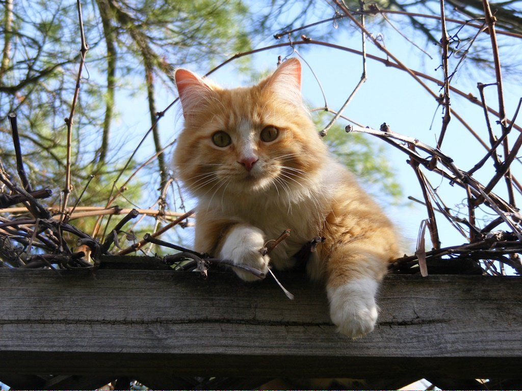 Cats Near Me For Sale CatsHugging Cat care, Why do cats