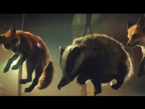 Süßer Weihnachtsclip Tiere Erobern Das Trampolin Xmas Youtube