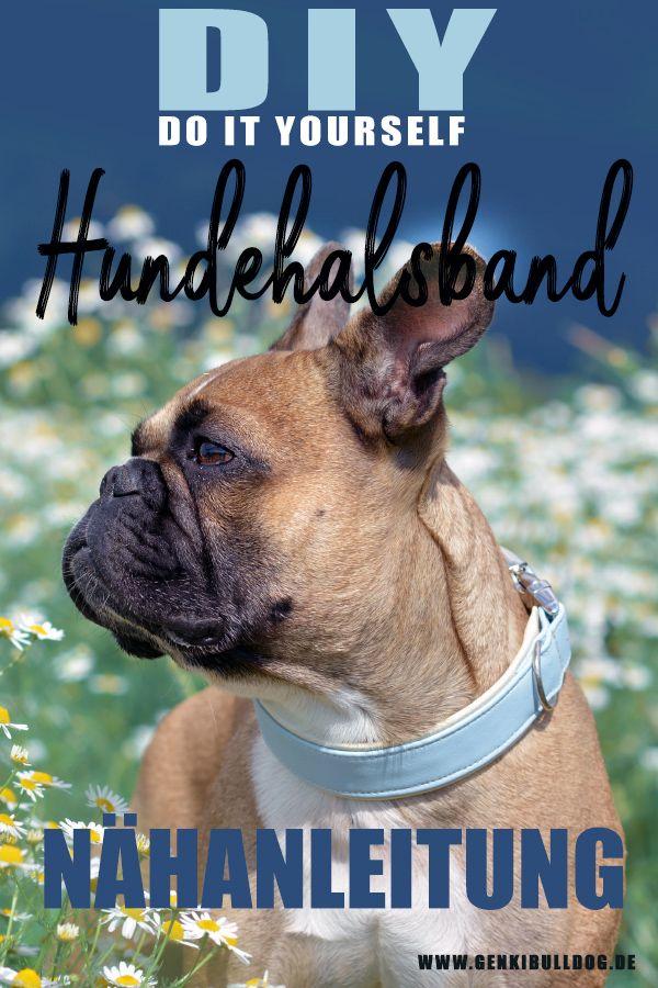Anleitung: Hundehalsband aus Stoff selbst nähen | Selbst genäht ...