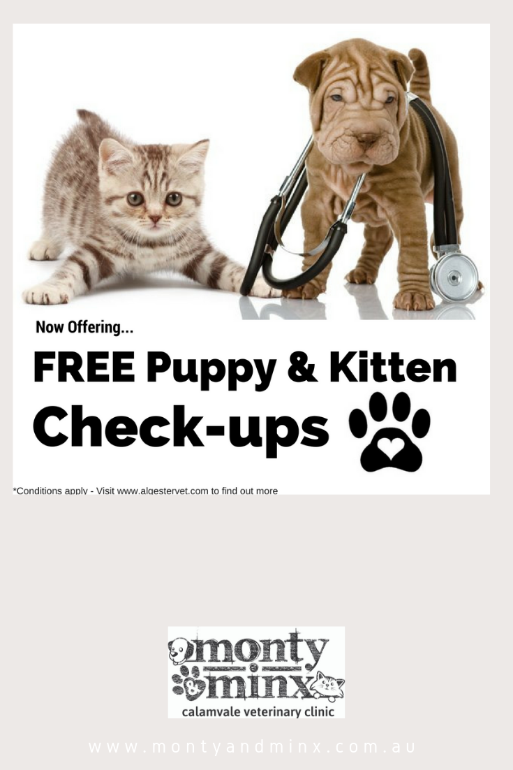 Kitten And Puppy Checks Free Puppies Puppy Health Health Check