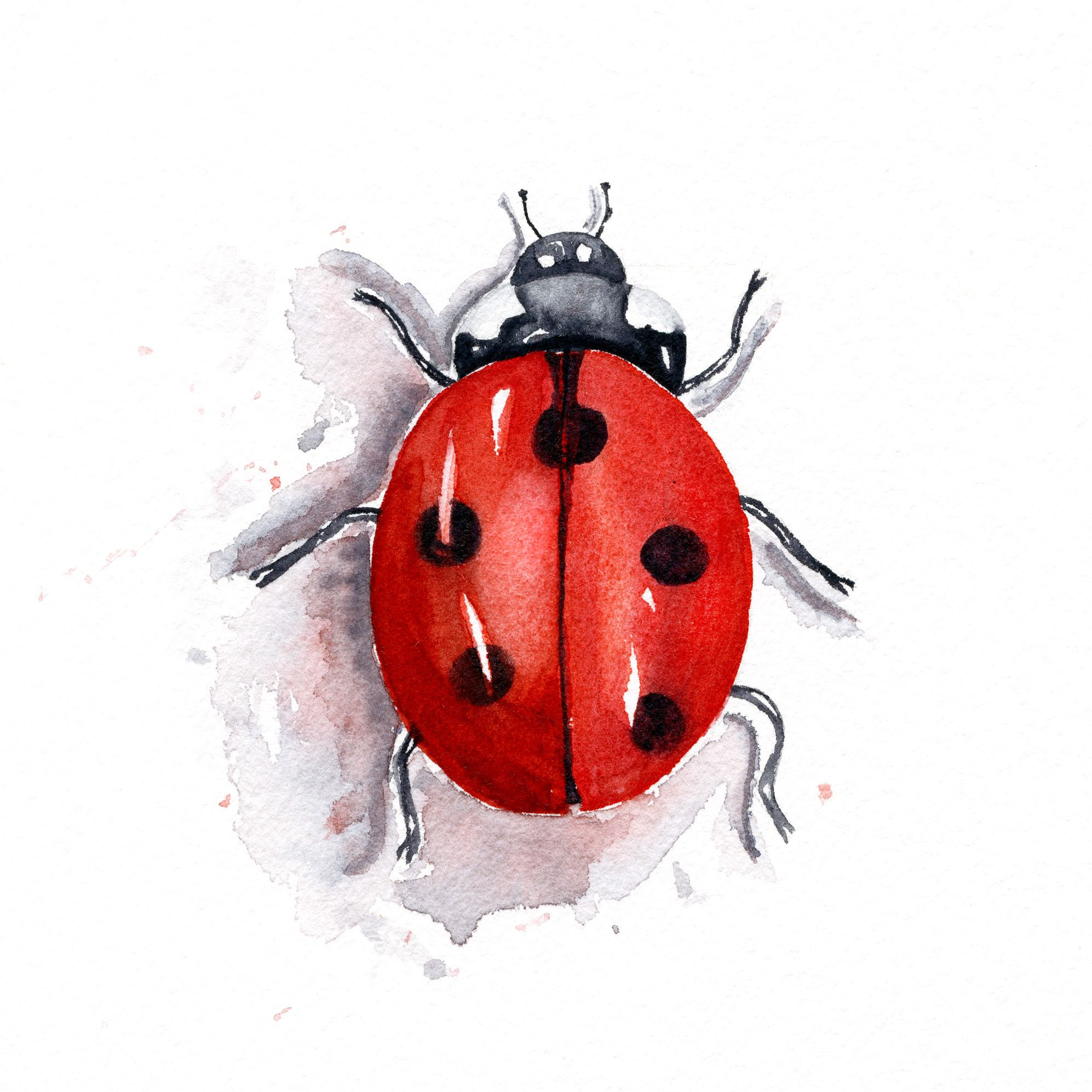 Coccinelle A L Aquarelle Watercolor Video Bee Art Body Painting