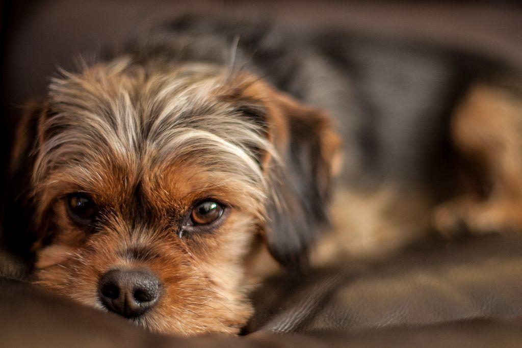 Rupert's Tired | Flickr - Photo Sharing!