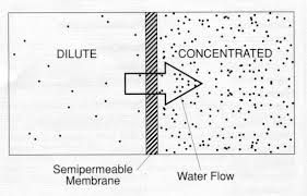 this diagram shows the difference between a dilute and concentration rh pinterest com Dilution Example Concentrated vs Dilute Solution Solution